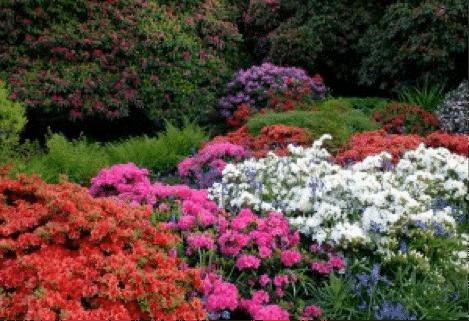 qnis-gardens